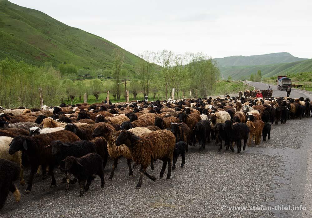 Unglaublich was hier dauernd an Fleischlieferanten (Kühe, Pferde, Schafe, Ziegen) über die Straßen getrieben wird. Wer soll das alles essen?